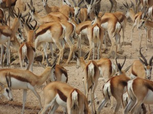 photos Afrique Australe 302