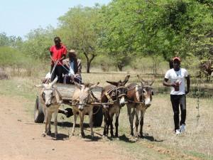 photos Afrique Australe2 108