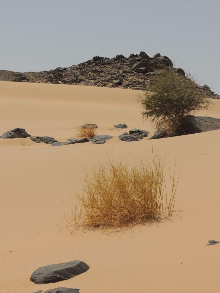 photos maroc 2014 082