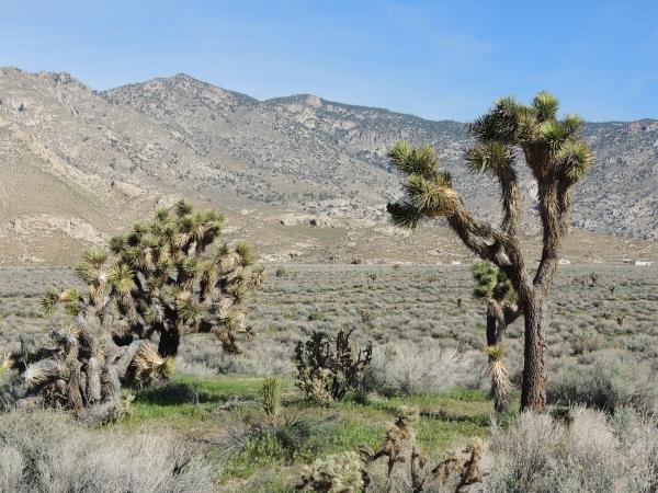 Dans la Sierra Nevada au nord-est de L.A.