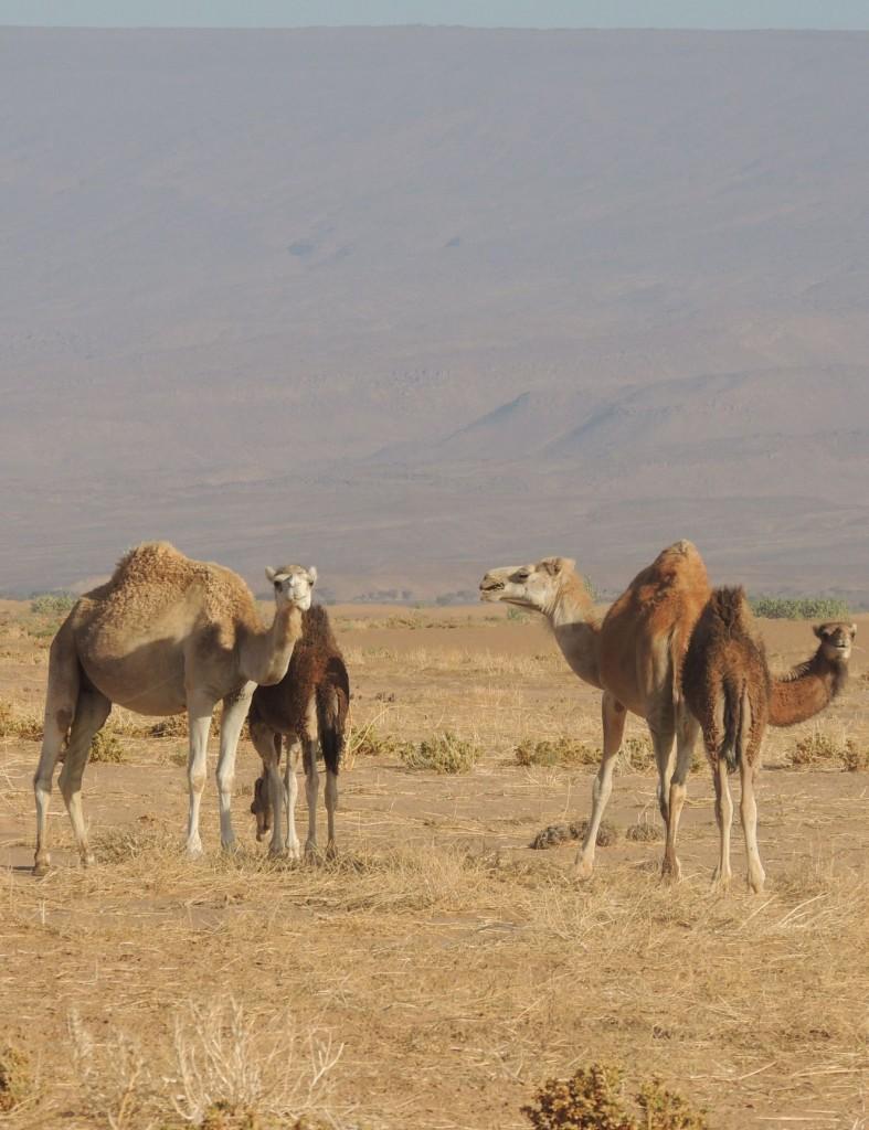 Photos Maroc 2016 -2 175