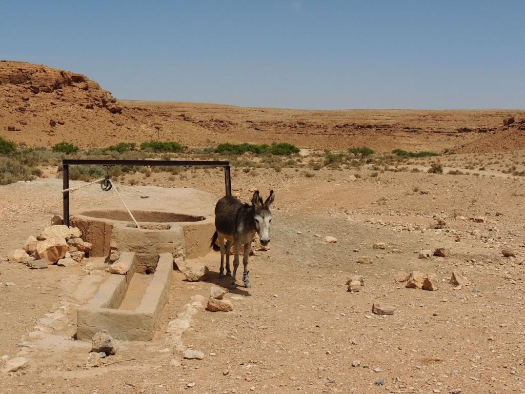 Photos Maroc 2017 028
