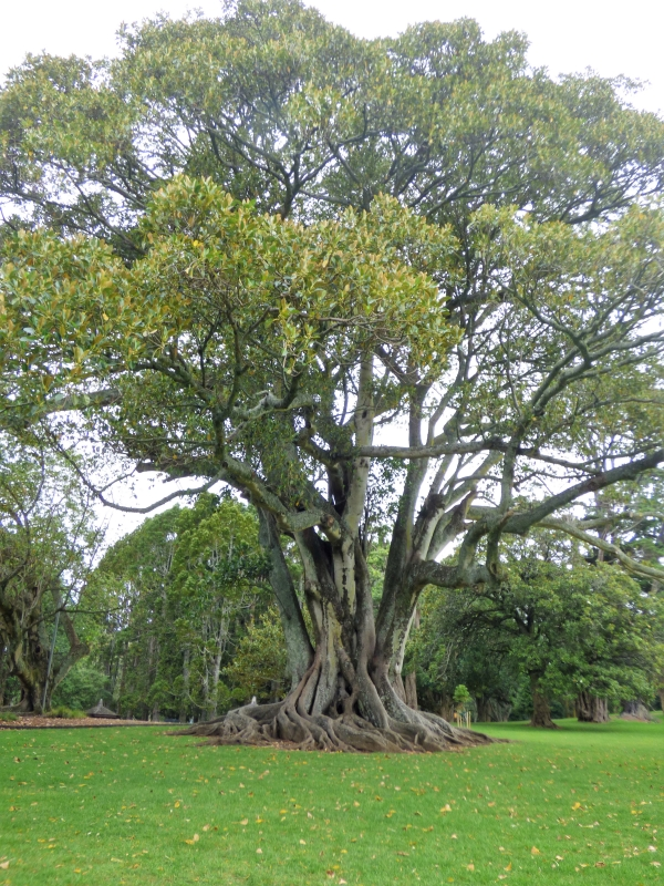 04 Beaux arbres dans le parc_01