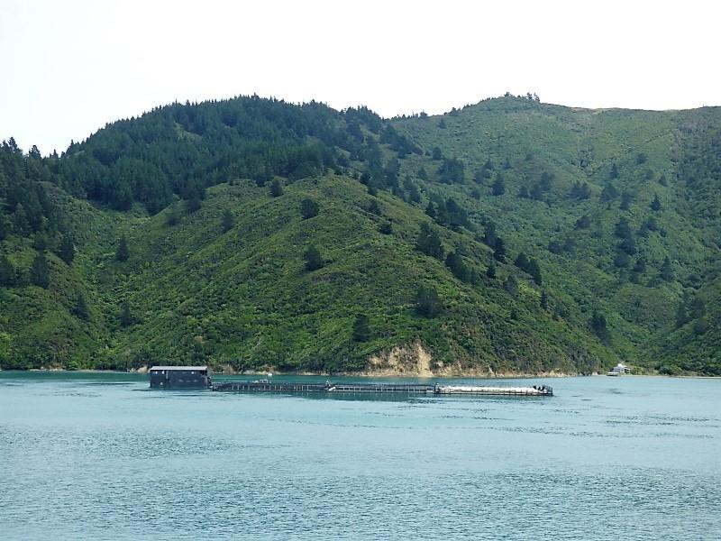 320 Ferme de saumon dans le fjord