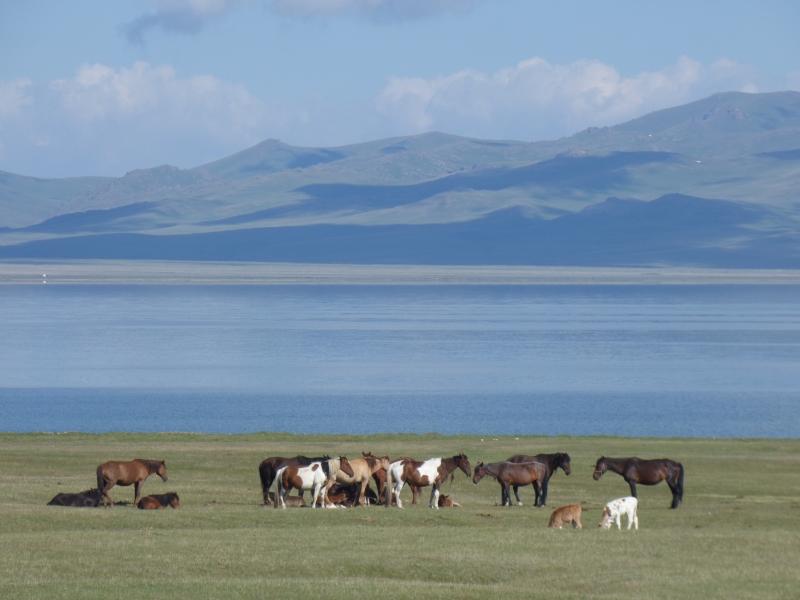 764 Troupeaux de chevaux mongoles